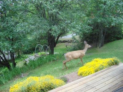 Backyard vermin in Ashland
